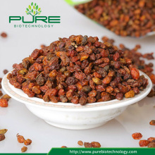 Hot sale high quality bulk sea buckthorn berry