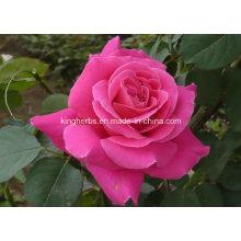 Чистое натуральное розовое масло, рафинированное масло, эфирное масло розы