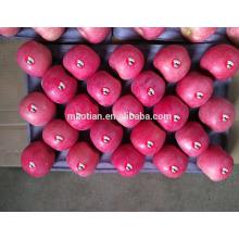 China Shandong Fresh Apple Fuji