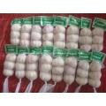 High Quality Standards Normal White Garlic