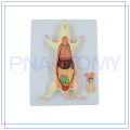 PNT-0821 hot sale animal rat mouse model