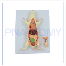PNT-0821 modelo de ratón de rata animal venta caliente