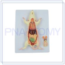 PNT-0821 venda quente modelo de rato de rato animal