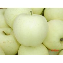 Neue Crop-Qualität für den Export von Golden Apple