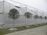 GLP-832 multi span greenhouse