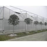 GLP-832 multi span greenhouse