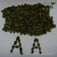 Graines de citrouille grains GWS Grade AA