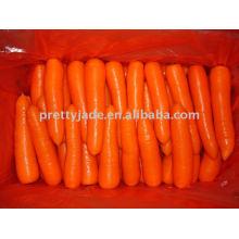 Zanahoria preminum fresca china