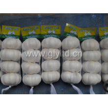 New Fresh Small Bag Emballage Ail blanc pur