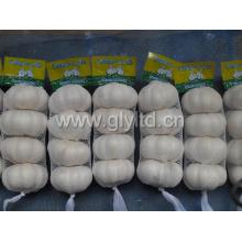 New Fresh Small Bag Packing Pure White Garlic