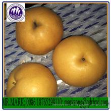 Высокое качество сладкие сочные (синго) корейский свежих груш