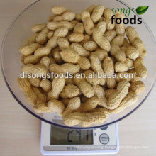 Import Peanut In shell from China shandong