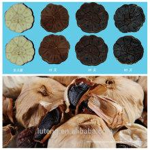 Vacuum pack máquinas de alho preto fermentado máquinas de alho preto