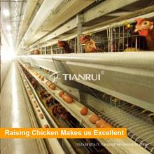Bonne qualité pour les cages de poulet de couche de poulet de type H