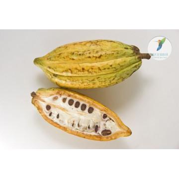 Herbes d'agrandissement de pénis sain cacao