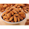 New Crop Competitive Price of Bitter Apricot Kernels in China