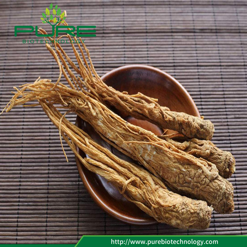 Angelica Sinensis root for sale