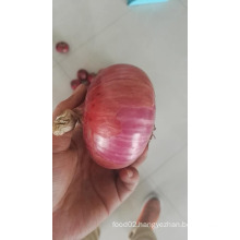 wholesale china products onion seeds price