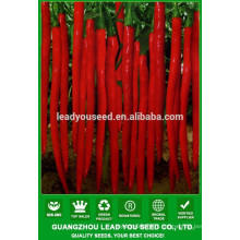 NP04 Houja Hot pepper prices, vegetable seeds types