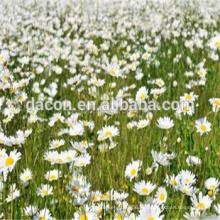 Extracto de crisantemo parthenium