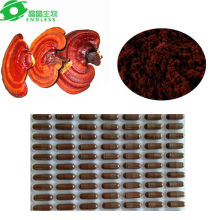 Star product!!Ling zhi spore powder capsule for Improve the Respiratory System