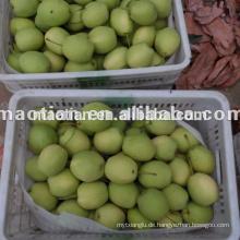 Shandong Birnen