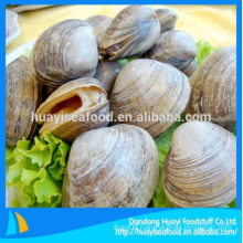 tasty frozen abundant wholesale surf clam reasonable price