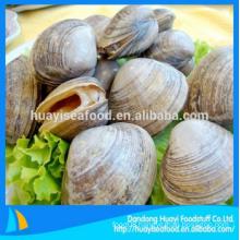 tasty frozen abundant wholesale surf clam reasonable price