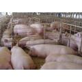 High Bioavailability Zinc Amino Acid Chelate Feed Grade
