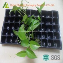 Caixa plantação de cultivo de mudas