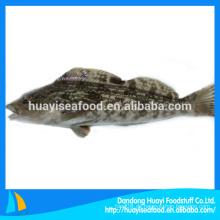 Großhandel gefrorene Greenling Fische