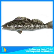 Russia fat greenling fish