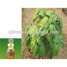 Top quality pure Clove Basil oil with reasonable price and fast delivery on hot selling !!