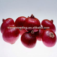 Oignon rouge 2012