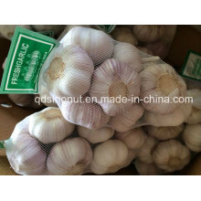 New Crop China White Alho