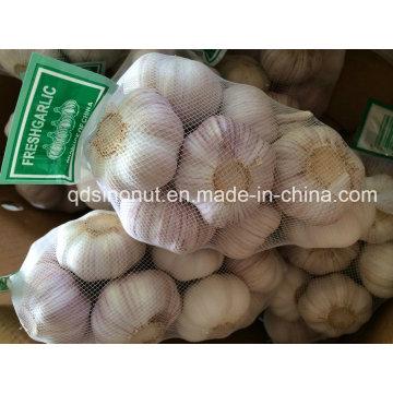 New Crop China Weißer Knoblauch