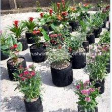 Haustier-Blume, die Geo-Tasche pflanzt