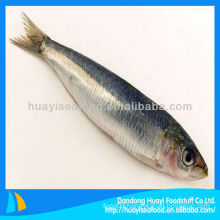 Fresh frozen seafood sardine all types of sardine fishes