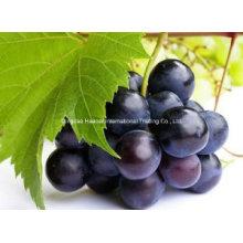 Extrait de pépins de raisin