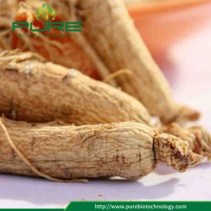 New Crop Natural Panax Ginseng Root