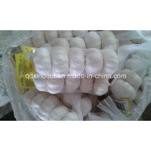 Alho branco puro da colheita nova (tamanho 5.5cm & acima)