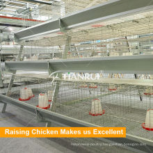 A type pullet automatic chicken poultry cage