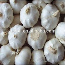 Normal White Type and Fresh Style Garlic