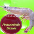 Кормовая Добавка Поставщик Фотосинтезирующих Бактерий