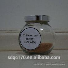 Fabricant fournissant Herbicide Tribenuron-méthyle 95% TC 75% WDG 75% DF 10% WP N ° CAS: 101200-48-0