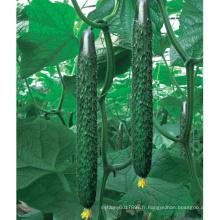 HCU09 Renshi 36cm de longueur, graines de concombre hybride F1 dans les graines de légumes pour la plantation