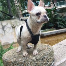 Nicht-Ziehen Widerstand Harness 2018 Neues Design Led Hundehalsband Modische Taktische Hundegeschirr