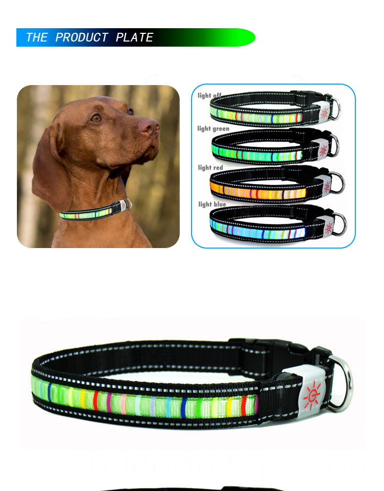 bright dog collars