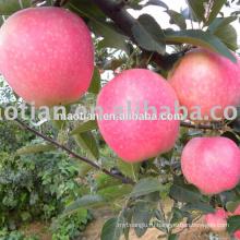Свежие Яблоки Гала