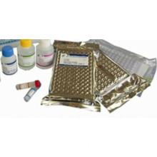 Human B-Lymphocyte Chemoattractant 1,BLC-1 ELISA Kit